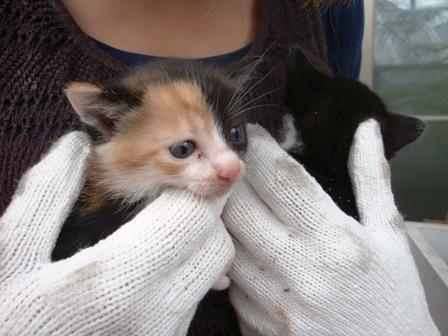 世界一かわいい野良猫の赤ちゃん、里親募集です!!_b0128954_10294878.jpg