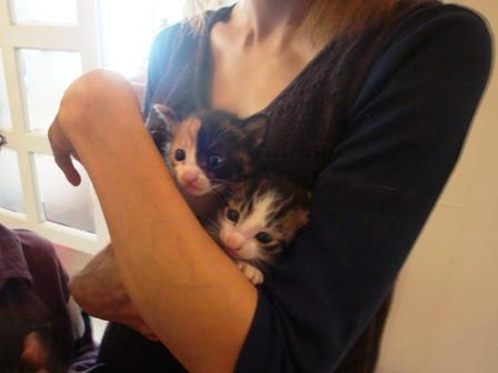 世界一かわいい野良猫の赤ちゃん、里親募集です!!_b0128954_10302033.jpg