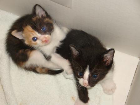 世界一かわいい野良猫の赤ちゃん、里親募集です!!_b0128954_1031922.jpg