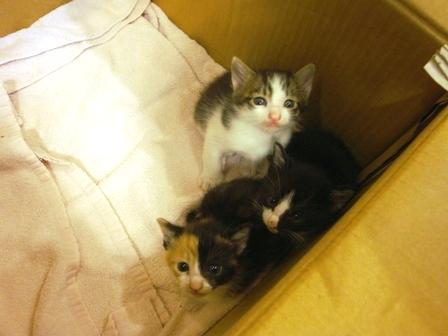 世界一かわいい野良猫の赤ちゃん、里親募集です!!_b0128954_10321823.jpg