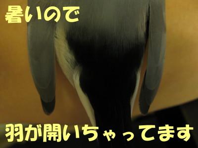 b0158061_20374762.jpg