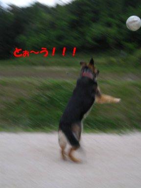 b0113663_823911.jpg