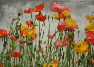 花の名前_d0023170_23574336.jpg