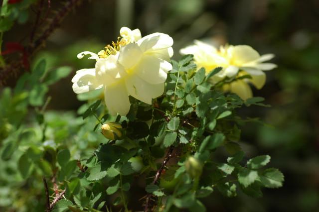 小さな葉っぱ_f0160480_18423562.jpg