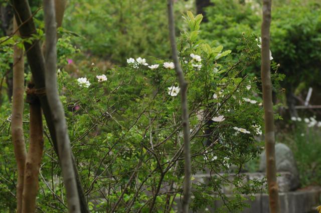 小さな葉っぱ_f0160480_1844882.jpg