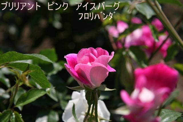 f0068584_17144297.jpg