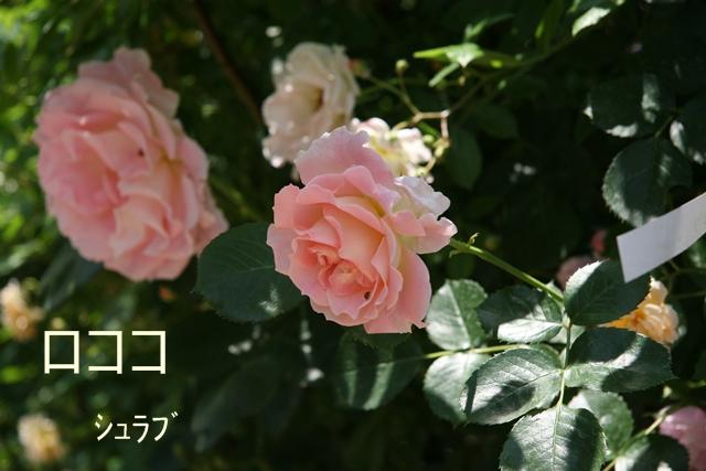 f0068584_19114284.jpg