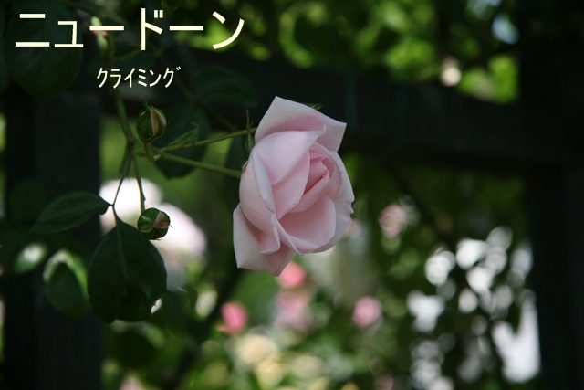 f0068584_19133267.jpg