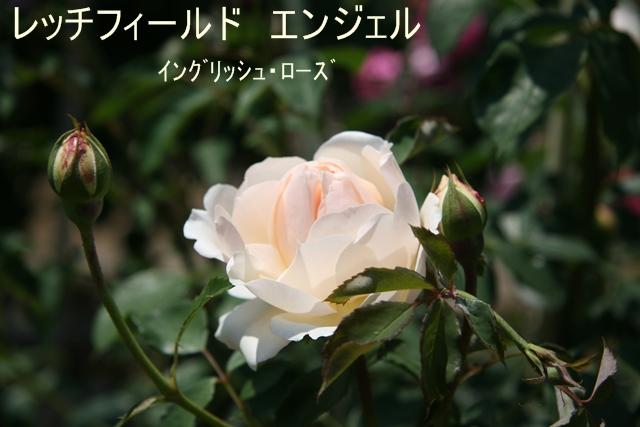 f0068584_19135032.jpg