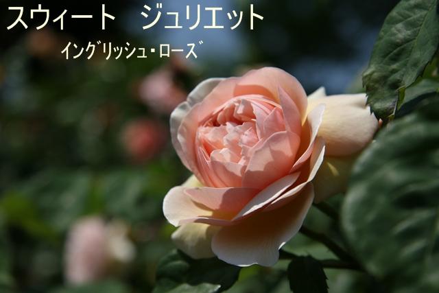 f0068584_1961146.jpg