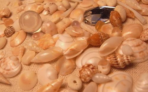 思い出の貝殻_e0177207_23451312.jpg