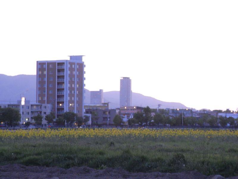 晩春の夕暮れ_c0025115_2051189.jpg