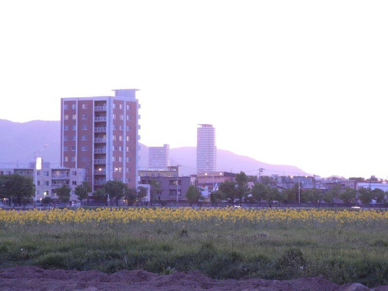 晩春の夕暮れ_c0025115_2052380.jpg