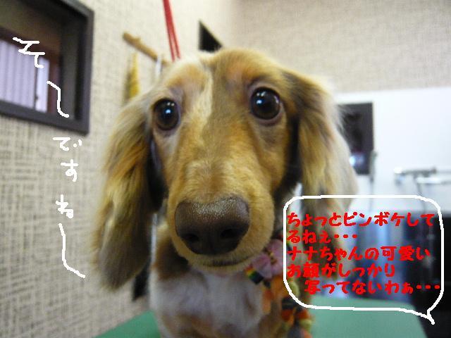 写真は嫌いなの・・・&ピンボケ&美!!_b0130018_13145921.jpg