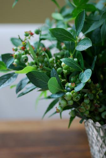 緑がきれいな季節_f0179528_23361440.jpg