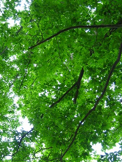 風薫る・・かつらぎ公園_b0100229_1371379.jpg