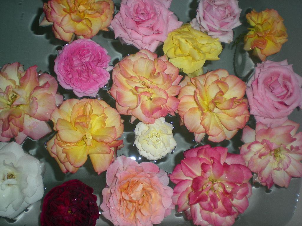 2009年5月19日(火)ゴージャスな薔薇風呂!!!_f0060461_20522916.jpg