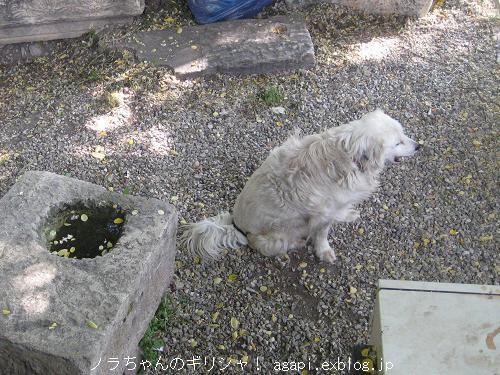 風の塔の番犬ベラちゃん_f0037264_20203483.jpg