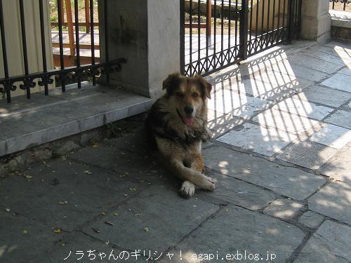モフモフノラちゃんの天使の微笑み_f0037264_2041271.jpg