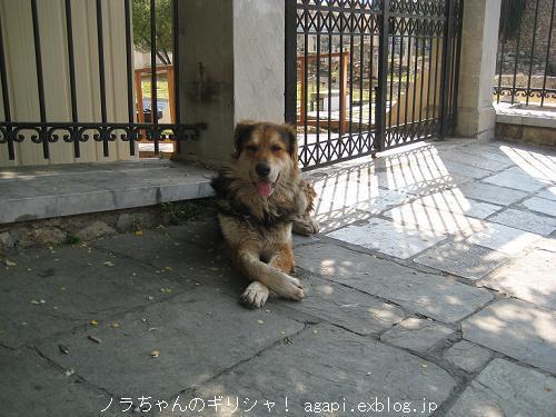 モフモフノラちゃんの天使の微笑み_f0037264_2042556.jpg