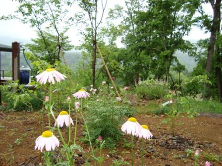 今の庭 5月3週目 2009_d0152765_15516.jpg