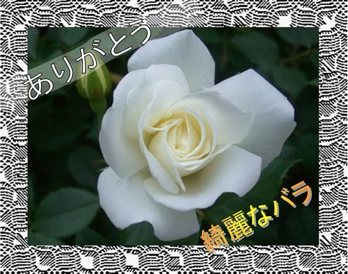 c0129682_0315175.jpg