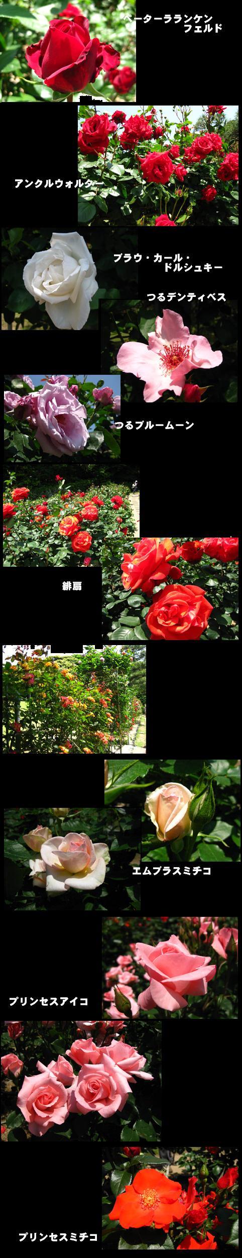 f0110488_16392058.jpg