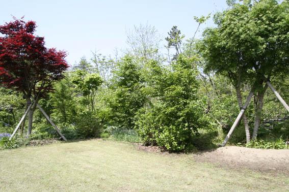 庭の新緑_e0054299_1017313.jpg