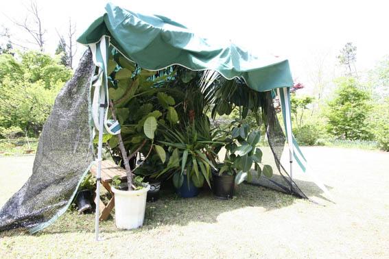 庭の新緑_e0054299_10174196.jpg