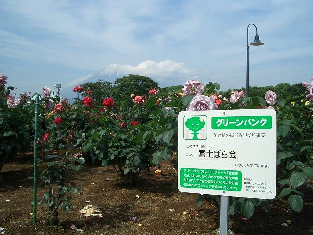 富士市は「バラのまち」です!_f0141310_2101597.jpg