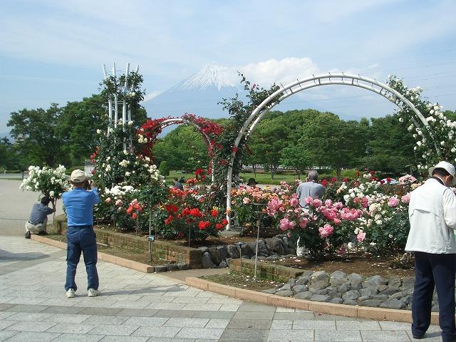 富士市は「バラのまち」です!_f0141310_210446.jpg