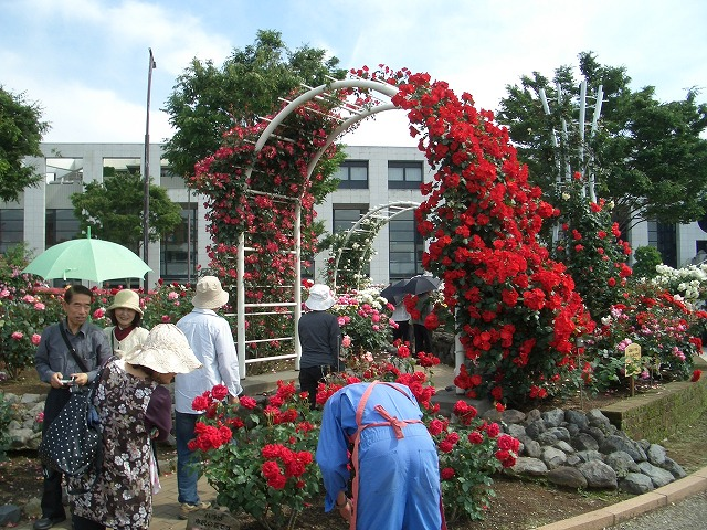 富士市は「バラのまち」です!_f0141310_293820.jpg