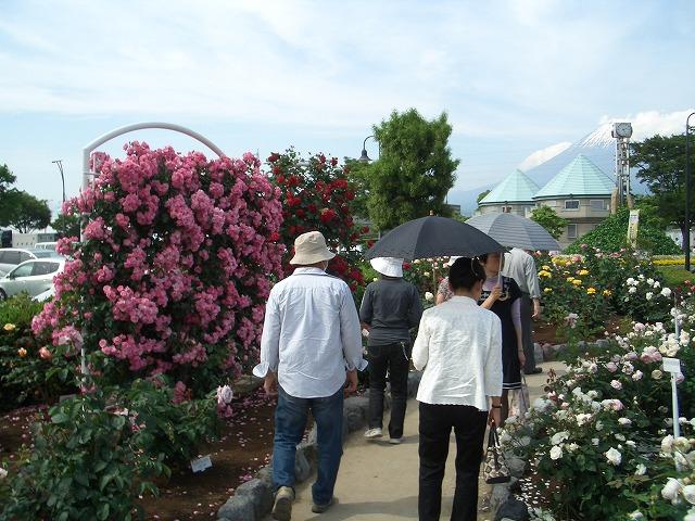 富士市は「バラのまち」です!_f0141310_295451.jpg