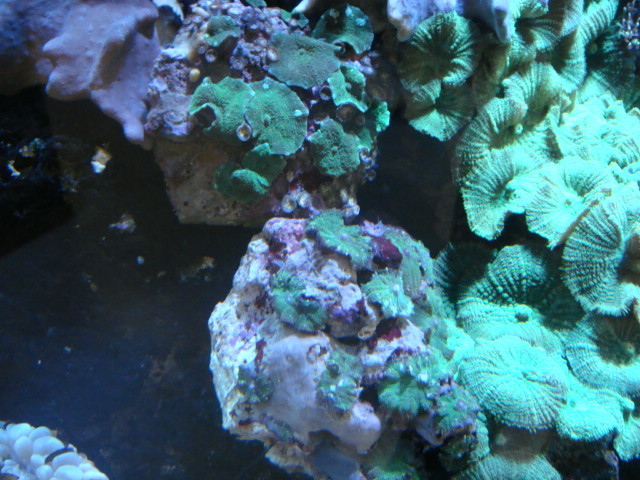 海水魚・サンゴ・水草・日本産淡水魚_f0189122_1524922.jpg