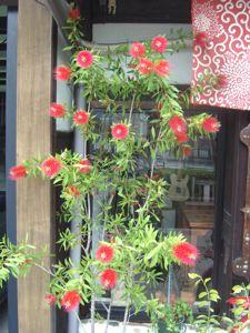 花その2_e0153039_150452.jpg