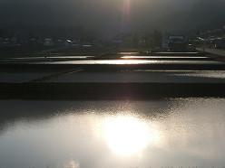 朝の風景 ~田んぼ~  5/20_e0123748_14124924.jpg