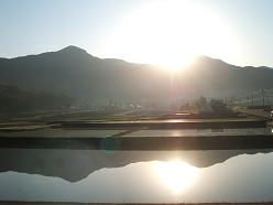 朝の風景 ~田んぼ~  5/20_e0123748_14465996.jpg