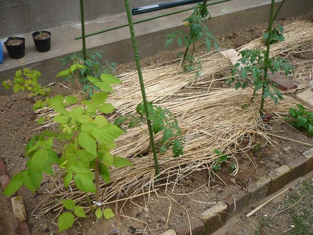 のんべえの庭は酒のツマミのネタばかり・・・_f0193752_121348.jpg