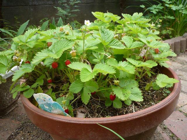のんべえの庭は酒のツマミのネタばかり・・・_f0193752_1471153.jpg