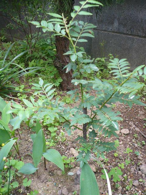 のんべえの庭は酒のツマミのネタばかり・・・_f0193752_149817.jpg