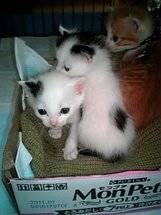 グレコ、人より猫_a0064067_114524.jpg