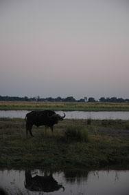 Look Africa !   旅するなら、この場所へ。 そして・・・_b0053082_17293199.jpg