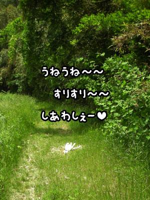 f0129214_1155261.jpg