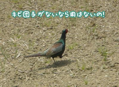 f0129214_1164851.jpg