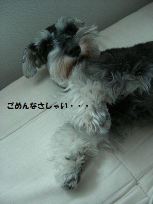 f0197317_1330036.jpg