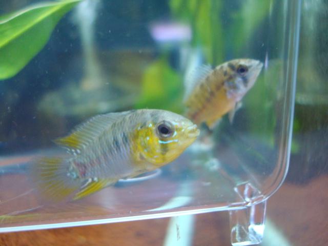 熱帯魚・水草_f0189122_1895561.jpg