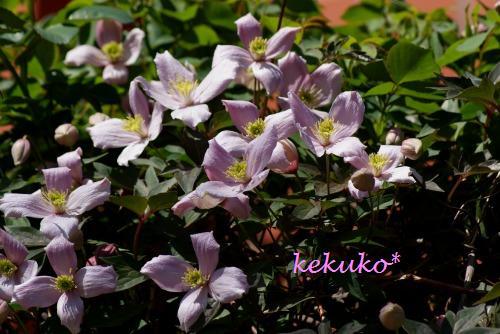 f0170524_19493292.jpg