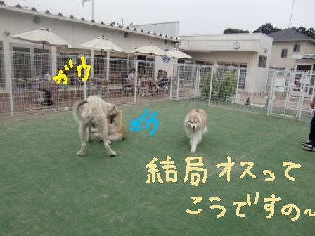 f0176830_2103148.jpg
