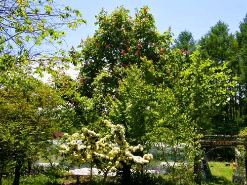 南八ヶ岳の庭園_d0127634_10531350.jpg