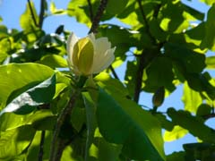 南八ヶ岳の庭園_d0127634_1056207.jpg